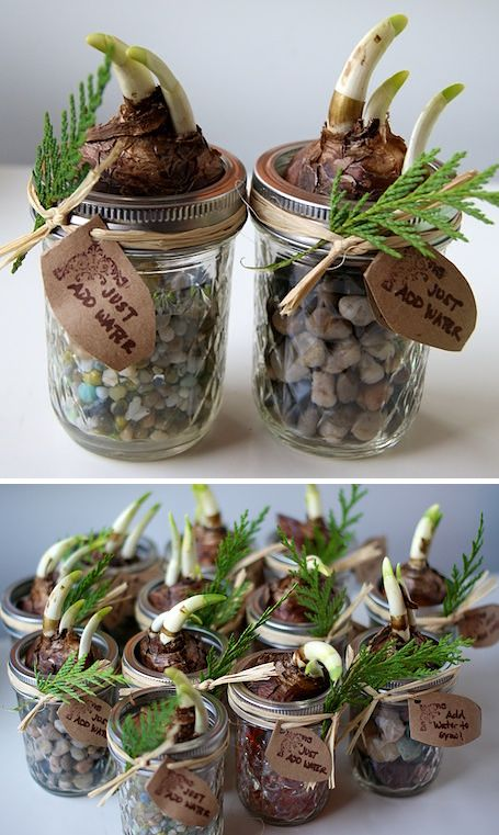 DIY Christmas gift for gardeners or flower lovers. Just place a bulb in a Mason Jar and decorate with jute and a label.