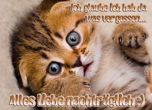 Pin Von Ute Baden Auf Gluckwunsche In 2020 Susse Katzen Fotos