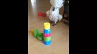 Harley the cockatoo - YouTube