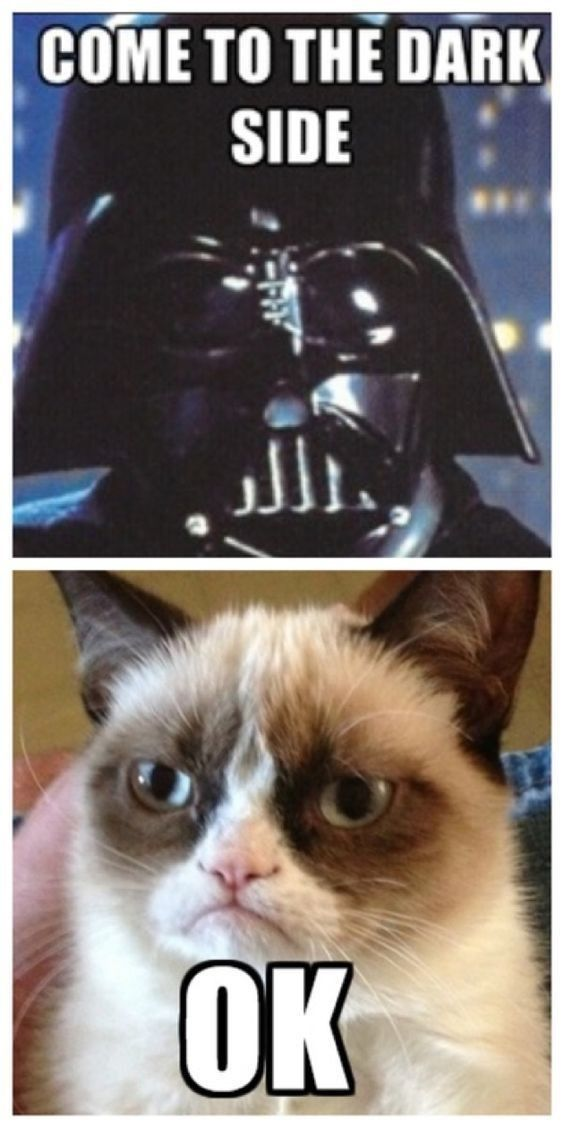 Memes For Anyone Who Loves Both Cats And Star Wars Funny Grumpy Cat Memes Grumpy Cat Quotes Funny Cat Memes