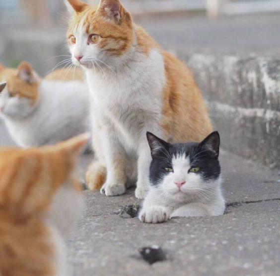 側溝から顔を出す野良猫)