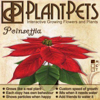 PlantPet Poinsettia Vintage (Limited)