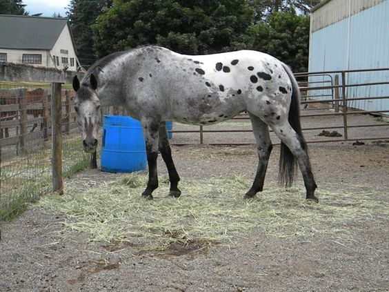 This is the horse I learned how to ride on, Whisper!! Imagine my surprise when I found her on Pinterest!