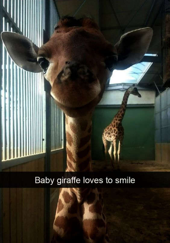Cute Gif Of Animals To Cute Animals That Start With A Even Cute