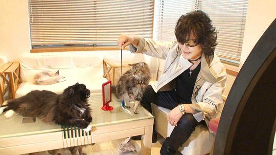 猫カフェtoshi