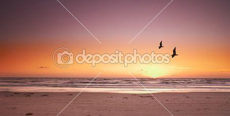 Uma foto por do sol praia e gaivotas — Imagem de Stock #19780123