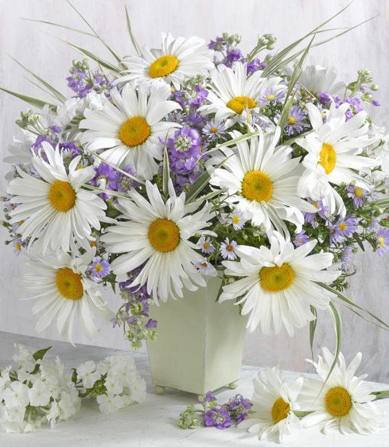 Marianna Lokshina - Flowers_LMN39205: