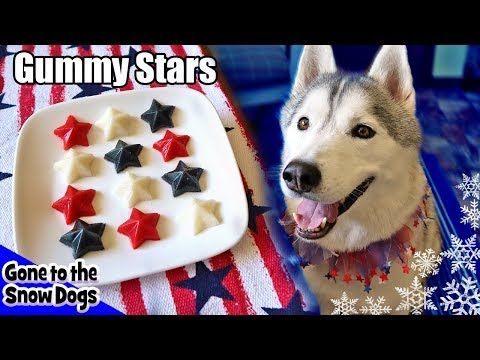 4th Of July Gummy Dog Treats Fruit Stars Gone To The Snow Dogs