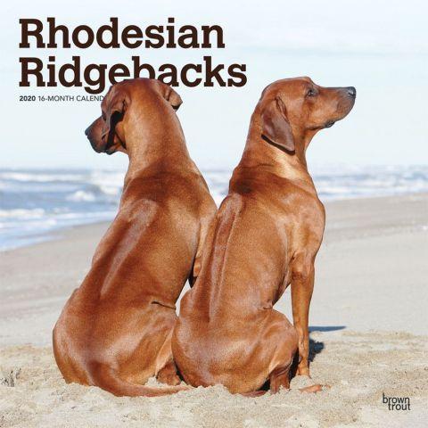 Rhodesian Ridgebacks 2020 Calendars Originally Bred In South