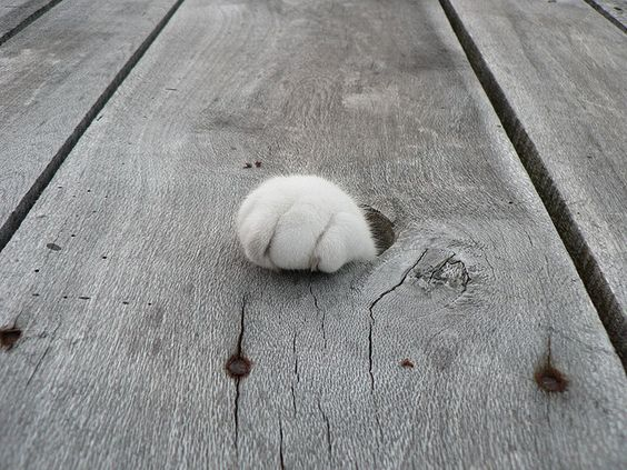paw...out of nowhere: