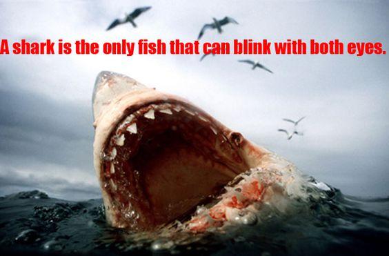 shark fact