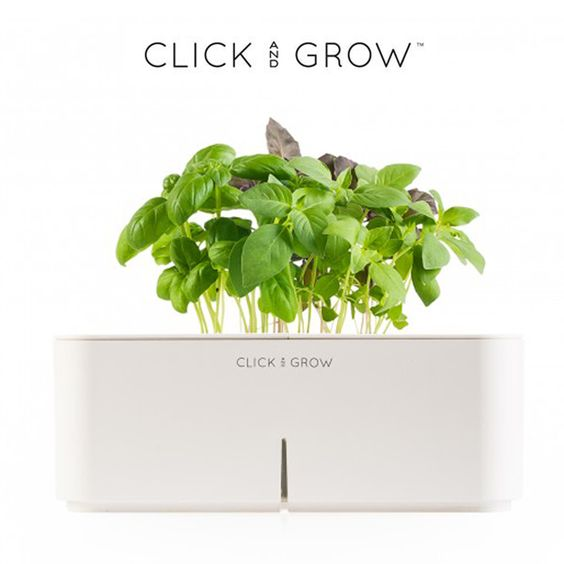 Basil Plant / Click and Grow {making home gardening easy!}
