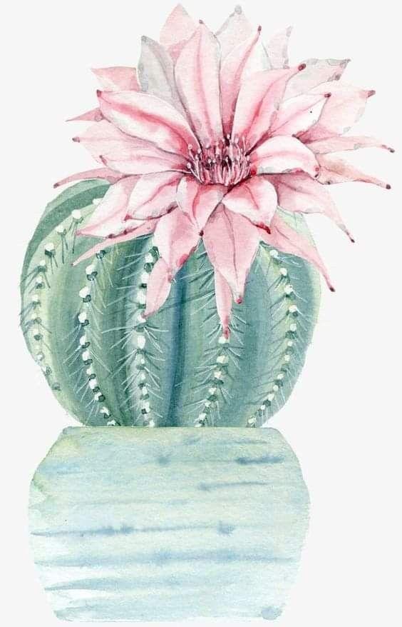 Pin By Leticia Garcia On Cactus Y Suculentas Cactus Illustration Cactus Art Cactus Painting
