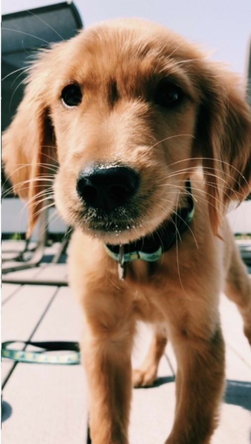 Dog Wallpaper Dog Wallpaper For Iphone Dogs Wallpaper Lovedogs Dogslove Doglover Lovedog Petdog Petlov Cute Baby Animals Puppies Cute Animals