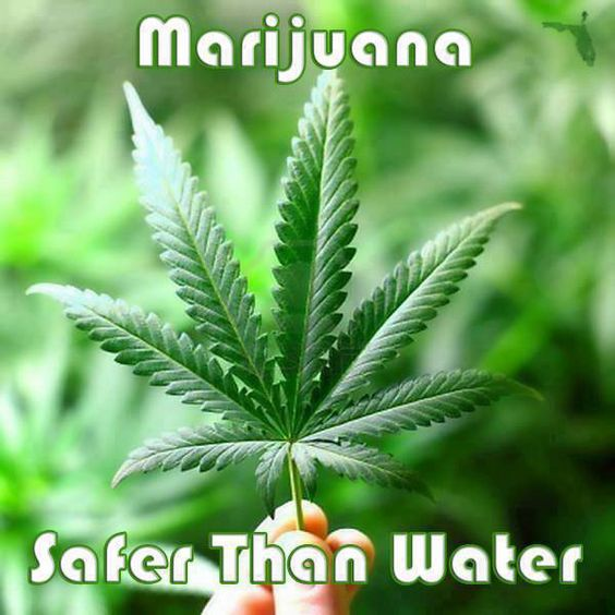 Marijuana safer than water
