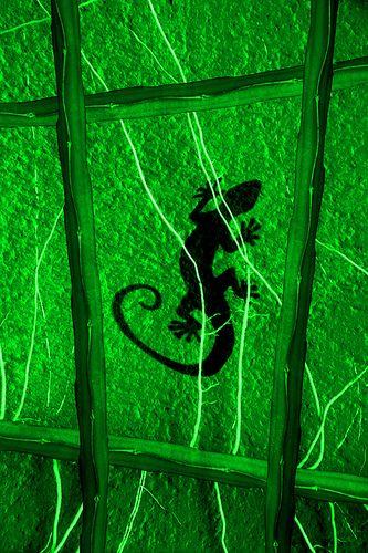 Geko Green