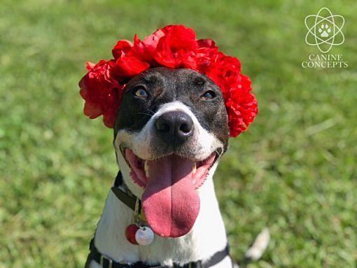Lebanon Me Pointer Meet Jade A Dog For Adoption