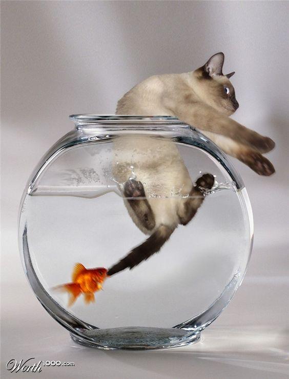 Dicen que el gati come al pez: