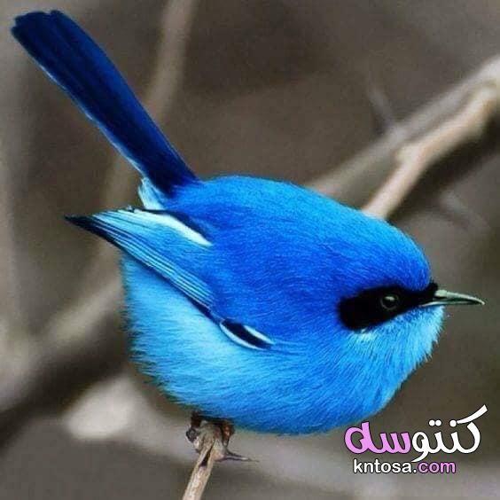 اجمل المناظر للطبيعة الزرقاء اجمل مناظر في العالم 2021 اجمل المناظر الطبيعية في العالم سحر الطبيعة Beautiful Birds Animals Animals Beautiful