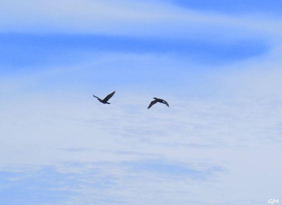 Pássaros - Salinas/RS