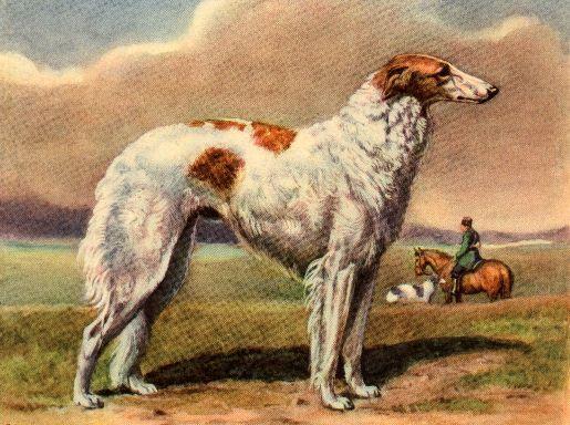 Borzoi Vintage Dog print