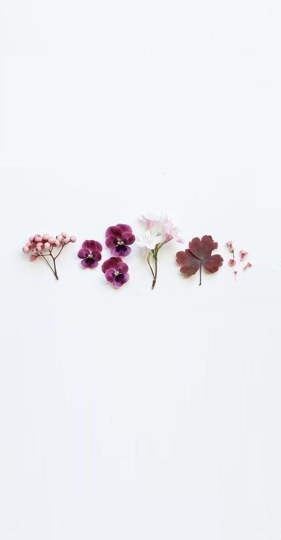 Flower Wallpaper Border Botanical Seed Label Floral Cherry Blossom Floral Decor