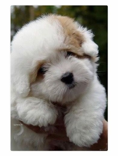 Dogs Rabbits And Cats Image By Ra Jani Cute Animals Fluffy