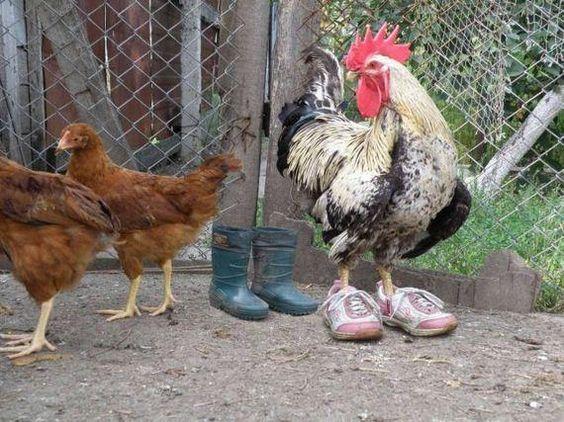 ¿Por qué no usan sus zapatos?