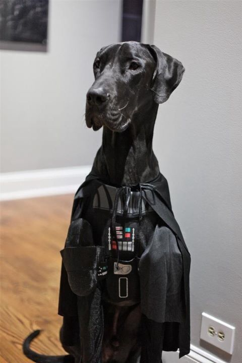 Halloween Costumes For Great Danes
