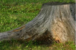 That old, useless stump in your yard has become an eyesore. While you can't stand to look at it, you can't stand the idea of paying someone to pull it up, either. This is the perfect time to get creative. Old stumps make excellent rustic planters. With a little elbow grease, you can change that eyesore into something beautiful.
