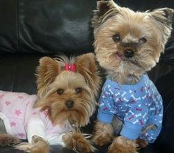 Cute pajamas to keep your dog cozy