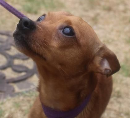 Adopt Pablo On Petfinder Puppies Funny Help Homeless Pets Adoption