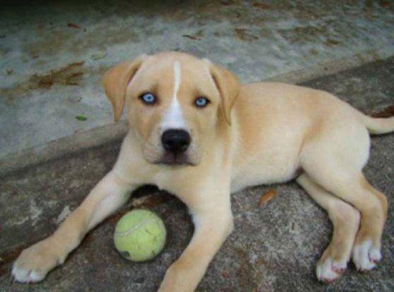 25 Perros de raza mestiza tan hermosos que los querrás en tu vida hoy mismo. | Qcosas