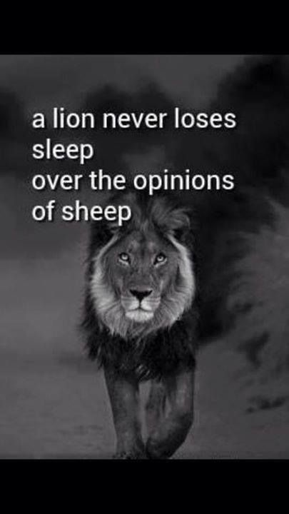 A lion never loses sleep over the opinions of sheep: