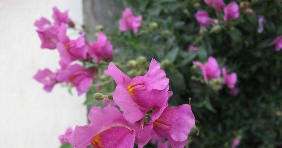 Pin Di Kumpulan Gambar Bunga