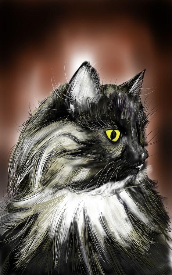 Portrait chat Choupinette  http://drawspeedart.blogspot.fr/