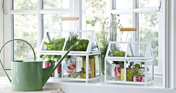 Inspiration og gode råd til Window Farming - indendørs køkkenhave