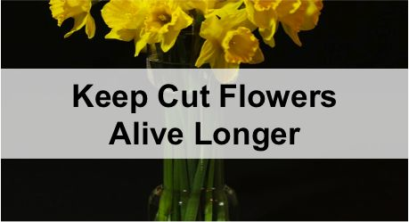 how to keep cut flowers alive longer for all the many bouquets my hubby brings me for the. Black Bedroom Furniture Sets. Home Design Ideas