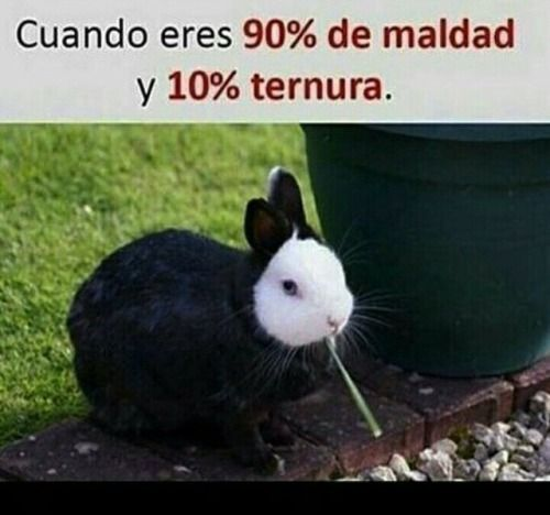 Imagenes De Risa Postales5601 Http Enviarpostales Net Imagenes Imagenes De Risa 1220 Funny Spanish Memes Bad Memes Funny Relatable Memes