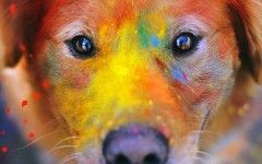 dog with colors all over