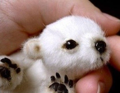 Baby polar bear!  never saw one this lil--been informed this is a toy..guess it could be :)
