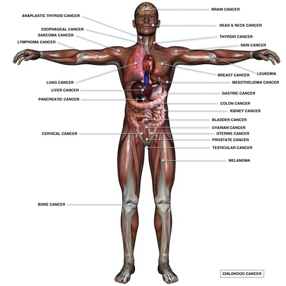 cancer and the human body: an inside look | lowering cancer risks, Muscles