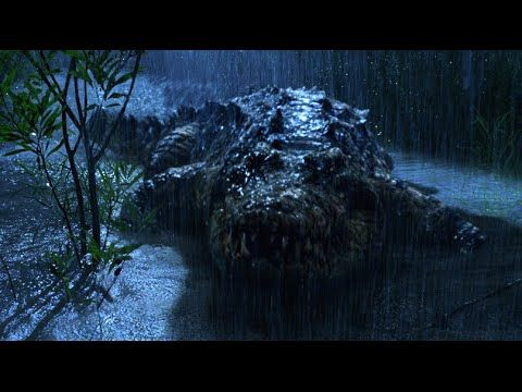 Legends of Nature: Gustave the Giant Crocodile - YouTube ...