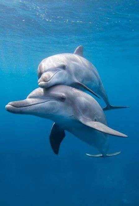 Dolphin cuddles