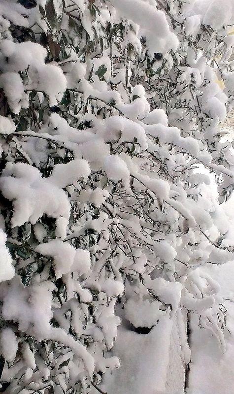 #Neve #neve #neve  :)
