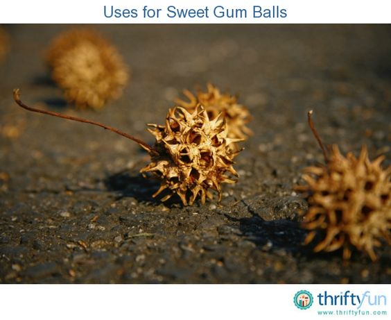 Uses For Sweet Gum Balls Sweet Gum Tree Crafts Sweet Gum Sweet Trees