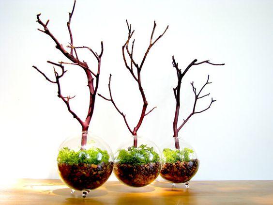 modern plants etsy