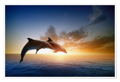 Malvorlagen Delfine Sonnenuntergang – tiffanylovesbooks.com