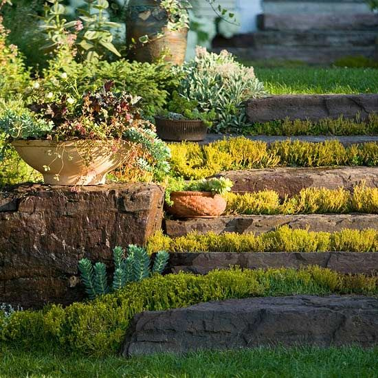 Succulents provide beautiful texture and functionality as a groundcover in difficult areas.