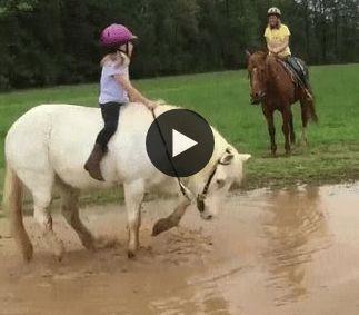 Cavalo se jogando na lama